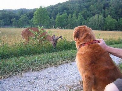 dog-deer-1.jpg
