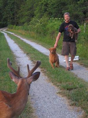 dog-deer-2.jpg
