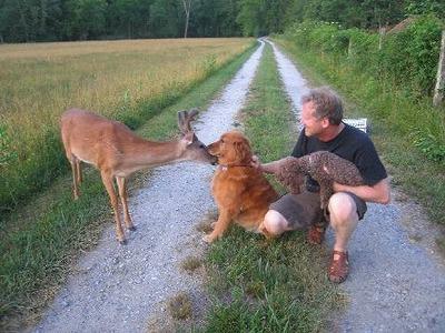 dog-deer-3.jpg