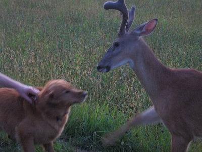 dog-deer-4.jpg