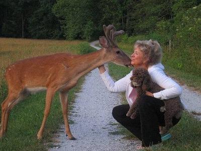 dog-deer-5.jpg