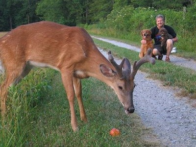 dog-deer-6.jpg