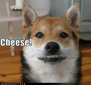 funny-dog-pictures-cheese.jpg