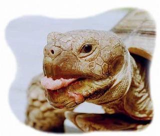 image_turtle5.jpg