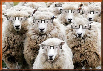 sheep_with_glasses_frames_1217472309.jpg