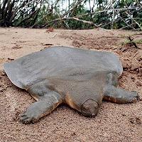 turtle_zoom.jpg