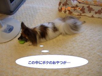 03-02_20101005183224.jpg