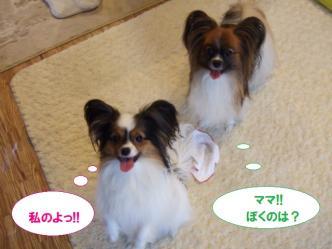 03-04_20101005183246.jpg