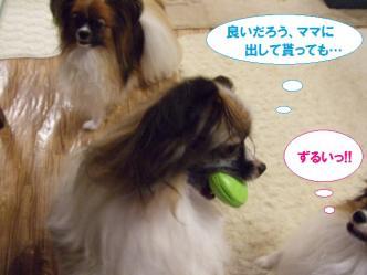 04-03_20101005183318.jpg