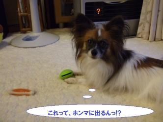 04-05_20101005183338.jpg