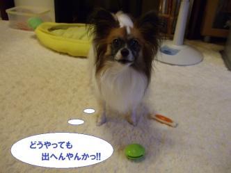 04-06_20101005183348.jpg