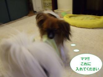 04-10_20101005183435.jpg