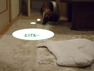 04-12_20101005183458.jpg