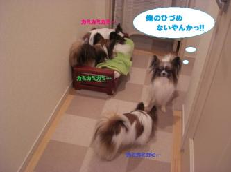 06-05_20100208213645.jpg