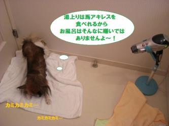 06-12_20100211182729.jpg