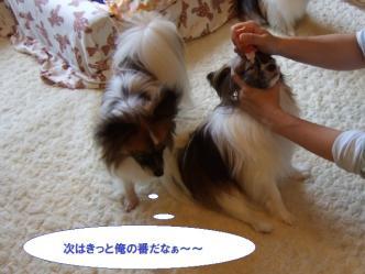 09-03_20100914101528.jpg