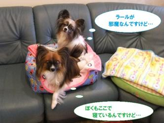 11-01_20110111200030.jpg