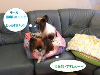 11-02_20110111200029.jpg