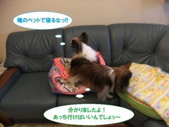 11-03_20110111200029.jpg