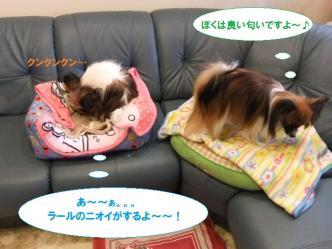 11-04_20110111200028.jpg