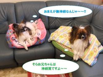 11-05_20110111200028.jpg