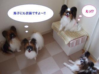 12-04_20100712125541.jpg