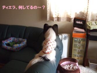 14-01_20100214190444.jpg