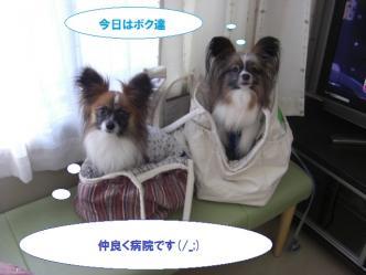 15-01_20100520093022.jpg