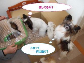 22-07_20100323230424.jpg