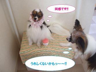 25-11_20100825153327.jpg