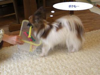 27-10_20100602095300.jpg
