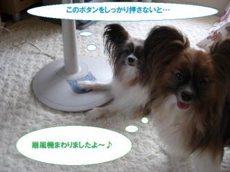 27-10_20100704231835.jpg