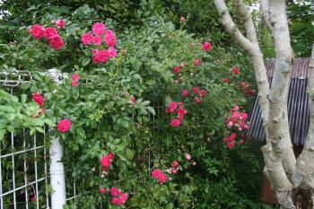 006_convert_20110524154231.jpg