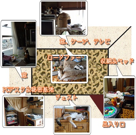 roomマップ