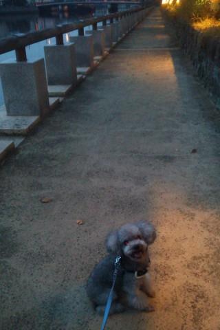 暗闇のお散歩