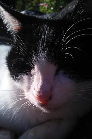 猫(=^ェ^=)
