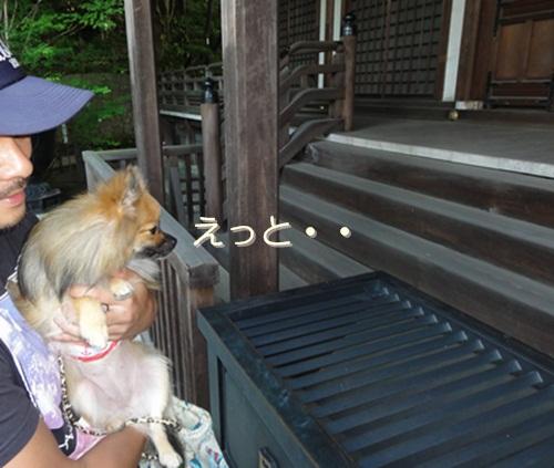 cats_20120712172526.jpg