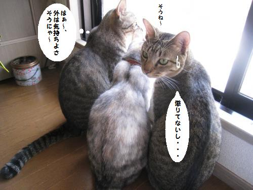 3○○トリオ