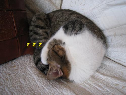 ミーちゃん熟睡中