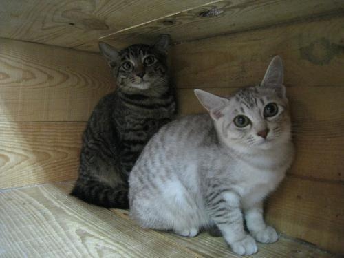 保護猫ちゃん4