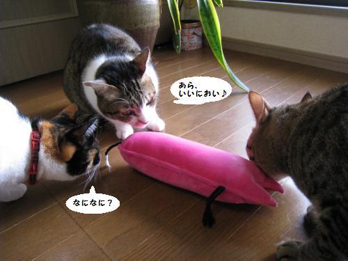 にゃんこキッカー2