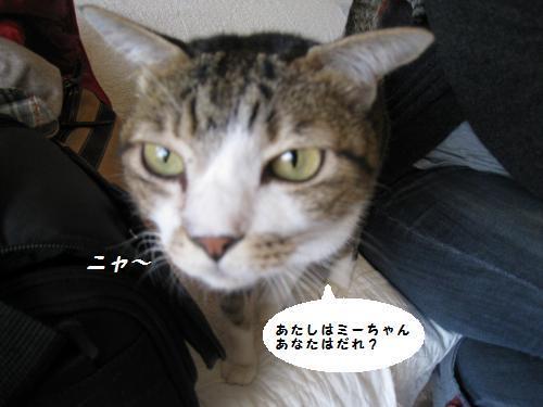 ミーちゃんの接待2