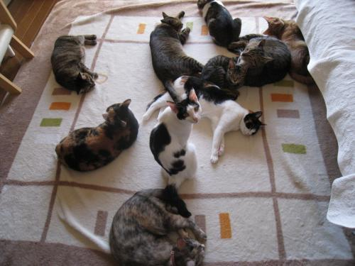 風物詩の猫団子