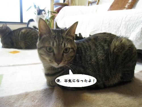 猫友さんご来宅