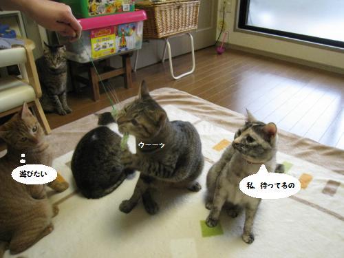 猫友さんご来宅1