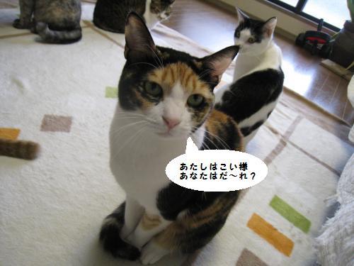 猫友さんご来宅2