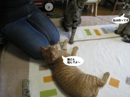 猫友さんご来宅3