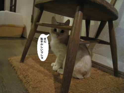 猫友さんご来宅4
