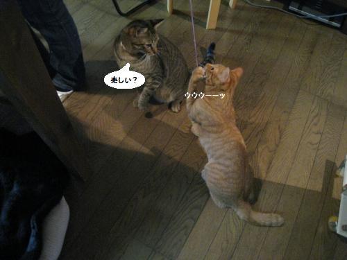 猫友さんご来宅5