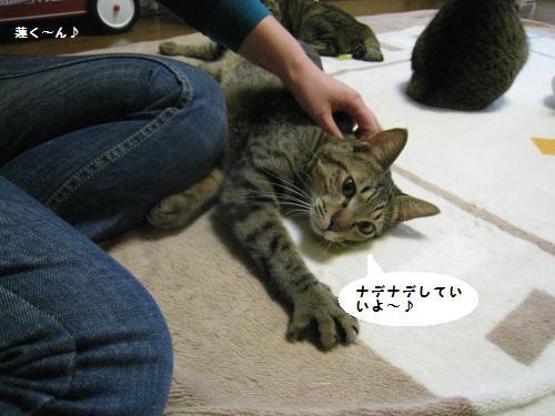 猫友さんご来宅6